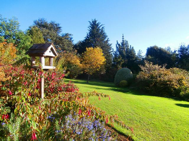 Zakładamy i dbamy o przydomowy ogród.